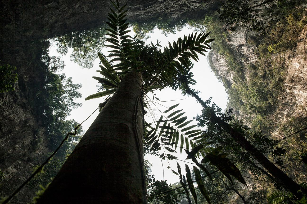 """Die Höhle hat ihren eigenen Dschungel, der """"Garden of Edam"""""""