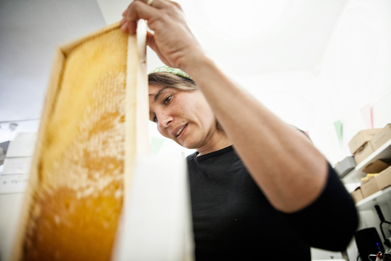 100 Bienenvölker in der Stadt Zürich werden von Wabe3 bewirtschaftet.