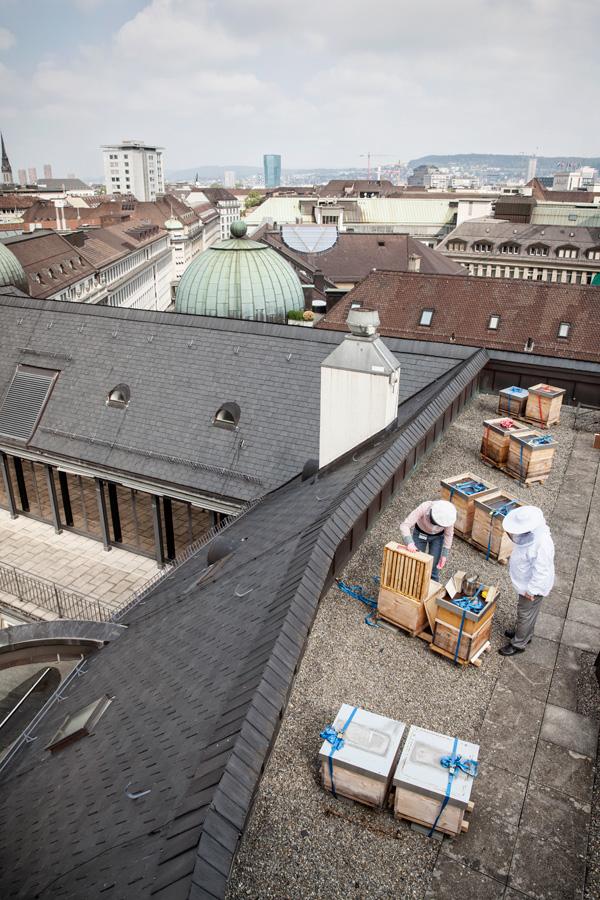 Bienen auf dem Dach der Beyer Chronometrie an der Bahnhofstrasse.